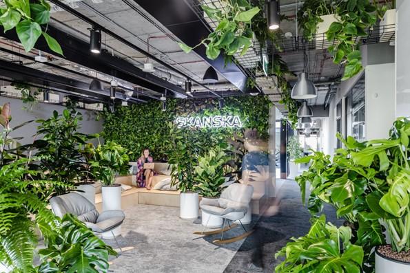 biuro skanska pełne roślin