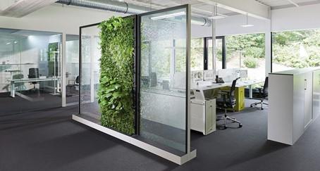szklane meble z roślinami